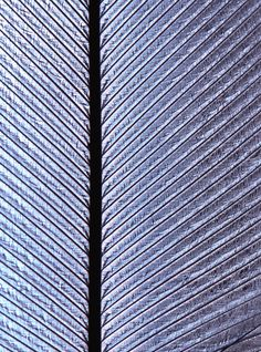 Patterns in Nature Photography / Feather closeup / art photo. Feather Photography, Texture Photography, Outdoor Photography, Abstract Photography, Light Photography, Macro Photography, Organic Structure, Turkey Feathers, Wild Turkey