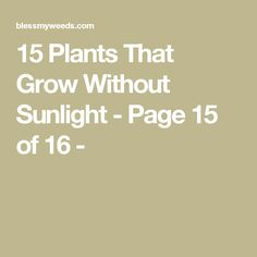 15 Plants That Grow Without Sunlight - Page 15 of 16 -