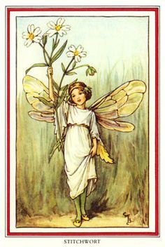 Cicely Mary Barker Stitchwort Fairy Beautiful | eBay