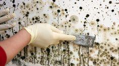 Astuces de grand-mère pour enlever et se débarrasser définitivement de la moisissure sur les murs