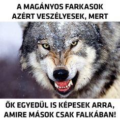 A magányos farkasok egyedül is képesek arra amire mások csak falkában. Wolves, Lions, Documentaries, Husky, Youtube, Quotes, Random, Collection, Qoutes