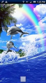 Dolphin Rainbow APK Live Wallpaper Free Download | Free Android App Shop