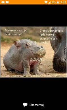 Gdy ci smutno, gdy ci źle... #humor # Humor # amreading # books # wattpad Wtf Funny, Funny Memes, Polish Memes, Weekend Humor, Komodo Dragon, Quality Memes, Really Funny, Fnaf, Haha