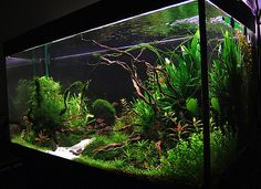 Aquascape Driftwood-1