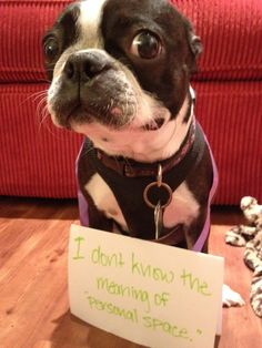 Hilarious and true! boston-terrier Leonard! Haha