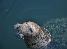 Simple But Elegant Hampton Lifestyle: Seal Watching - See more at: http://news.princeofscots.com/2015/01/06/simple-but-elegant-hampton-lifestyle-seal-watching/#sthash.vdLMsE8y.dpuf