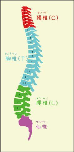 タイマッサージの解剖学 もっと見る