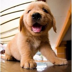 How cuuute!! ❤️❤️ #dog #puppy #baby #photooftheday #cute #petstagram #supercute #dog #love #pets