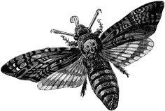 Google Image Result for http://etc.usf.edu/clipart/82600/82666/82666_head_moth_lg.gif