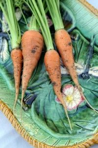 Five fabulous cool-season veggies to grow from seed.   Photo by Isabel Gomes.
