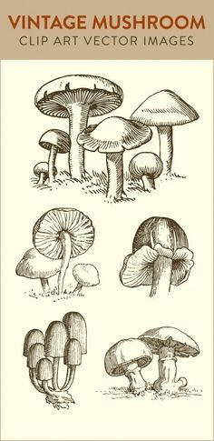 mushroom clip art, vintage mushroom, vector art clipart, royalty free images, do. Art Clipart, Vector Art, Mushroom Drawing, Mushroom Art, Vintage Images, Vintage Art, Vintage Drawing, Vintage Roses, Arte Peculiar