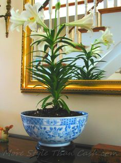 Easter Lily In A Bowl