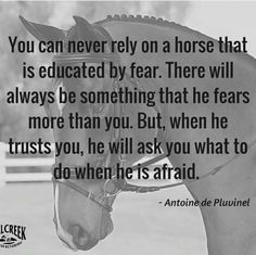 Horse training quotes products 24 Ideas for 2019 Equine Quotes, Equestrian Quotes, Equestrian Problems, All The Pretty Horses, Beautiful Horses, Inspirational Horse Quotes, Motivational Board, Horse Riding Quotes, Riding Horses