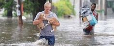 Please help the animals !