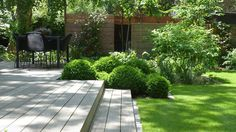 Love the clean lines of the wooden decking contrasted with the round box 'Buxus sempervirens'