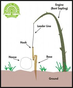How to build a snare to catch small animals.