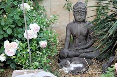 意外と良く合う。仏像と猫のツーショット光景「仏猫」