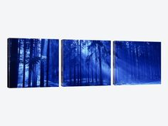 Trees Titisee Germany by Panoramic Images 3-piece Canvas Print