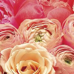 Coral Peony Obsession.