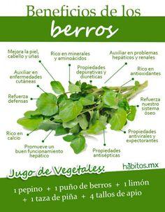 BENEFICIOS DE LOS DELICIOSOS BERROS