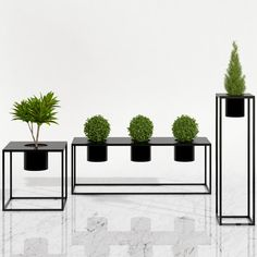 Potted plants 05