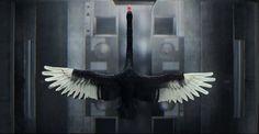 Amazing ! :-O MCLAREN Black Swan VCCP Black Swan, Bald Eagle, Ads, Amazing