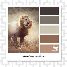 The Creature Color book features some of the most popular inspiration from the Design Seeds website.