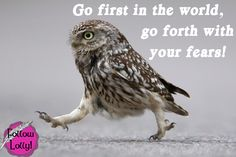 Funny owl, owl humor, hilariousness, humour animal, jokes funny …For the funniest pictures and jokes funny visit www. Humor Animal, Funny Animal Memes, Funny Animal Pictures, Funny Animals, Cute Animals, Funniest Pictures, Funny Images, Animal Sayings, Talking Animals