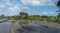 Bali Rice fields 2016 Photo: E.S.Jakob ARTel.j. St.Rosareh Austria