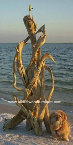 The driftwood lamp gallery is here! Driftwood hawaiian lamps!