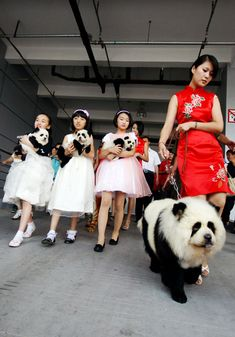 This is the BEST! In China there is a huge craze to dye your pets to look like wild animals