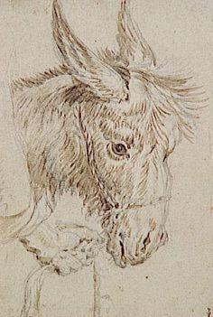 RUBENS -Tête d'âne