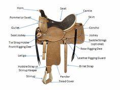 Horsemanship: Western Saddle Parts