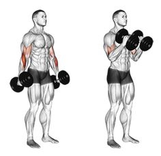 Guide for exercise of fitness and bodybuilding . Target muscles are marked in red. Back And Bicep Workout, Forearm Workout, Back And Biceps, Dumbbell Workout, Workout Routine For Men, Gym Workout Tips, Fun Workouts, At Home Workouts, Best Forearm Exercises