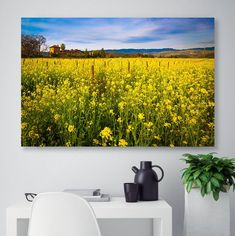 Winery Photo, California Napa Valley Print, Spring Floral Canvas, Vineyard Photo, St. Helena Wine Country Decor, Mustard Fields Serenity Art