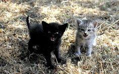 Ay, los gatitos... Son adorables, achuchables e irresistibles. A menos que les pilles en un mal día. Entonces se convierten en pequeños demonios esponjosos que se cuelan en tu alma con su furia desatada.