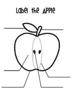 Common Core Aligned- All About Apples Book, parts of an