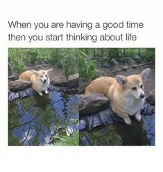 Life is harder than we thought it would be. #memes #lol #funny #depressing #life