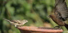 Fight over food #birds #Canon #DSLR #EOS