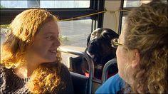 #Legal: Cachorra toma ônibus para o parque sozinha ↪ Por @jpcppinheiro. Conheça Eclipse, a labradora de Seattle [EUA], cansada de esperar seu dono para passear, que decidiu usar o transporte público para ir ao parque. Veja só! http://curiosocia.blogspot.com.br/2015/01/cachorra-toma-onibus-para-o-parque.html