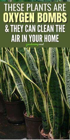 Best Indoor Plants, Outdoor Plants, Garden Plants, House Plants Decor, Plant Decor, Air Cleaning Plants, Household Plants, Inside Plants, Bedroom Plants