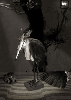 Studio for tryptich '3 momentos en al vida del buen Ivan'. 2013 Artworks, Bird, Studio, Illustration, Photography, Animals, Design, Rare Photos, Surrealism