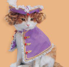 #fashion#cat