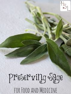 Preserving Sage for Food and Medicine during the summer ensures natural health and tasty food all winter.