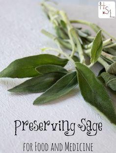 Preserving Sage for Food and Medicine| Homespun Seasonal Living