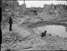 'Rip' the dog and an ARP Warden survey the scene of devastation following an air raid in Latham Street, Poplar. The bomb crater is full of water. In the background, the remains of the local surface shelter can be seen, which, although slightly damaged, is still largely intact. Piles of rubble and timber can also be seen. 1941.