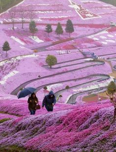 So creative! Takinoue Park - Park is located two hours north of Asahikawa, Hokkaido, the second largest island of Japan. Spring is here offering the best view of the mountain. The park is famous for its flowers Takinoue schibazakura (or pink Moss). Tiny pink flowers, breathtaking, spread of 100, 000 square meters. Paths lead tourists through rose-purple park on a hillside overlooking the city.