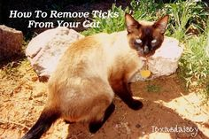Simple quick and easy secret to removing ticks painlessly from your cat, your family or any other pet