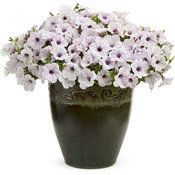 Proven Winners - Supertunia® Trailing Silver - Petunia hybrid white plant details, information and resources. Trailing Petunias, White Plants, Proven Winners, Blooming Flowers, Container Gardening, Backyard, Pure Products, Mini, Silver