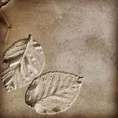 #concrete #leaves #leaf #beton #abdruck #spur #negative #experiment #architecture #architecturelovers #architectureloverspics #oberpfalz #bayern #neunburg #pictureoftheday #architizer #dezeen #designboom #architektur #design Concrete Leaves, Concrete Molds, Pavement, Experiment, Patio, Instagram Posts, Design, Stone, Bayern